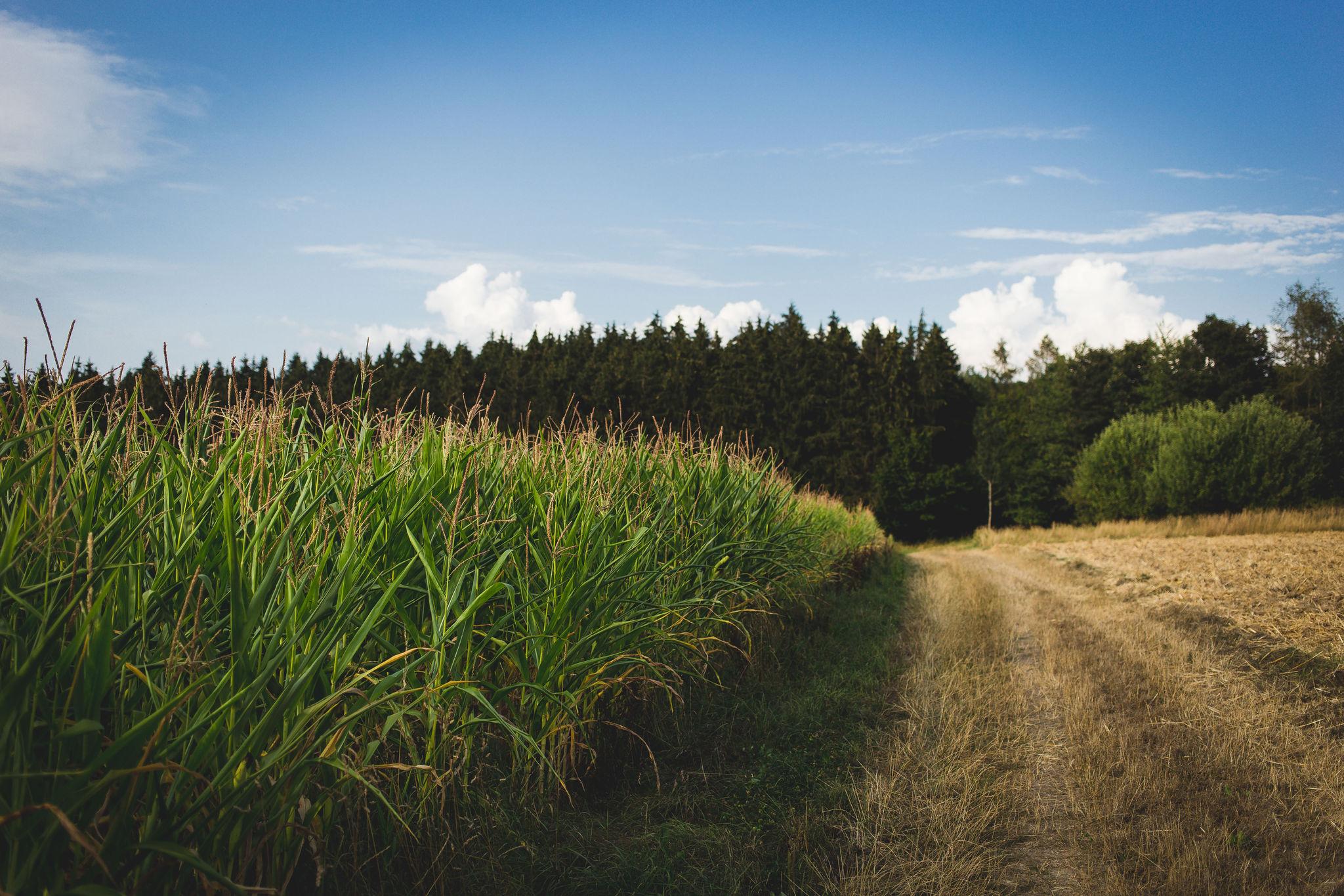 Fields II