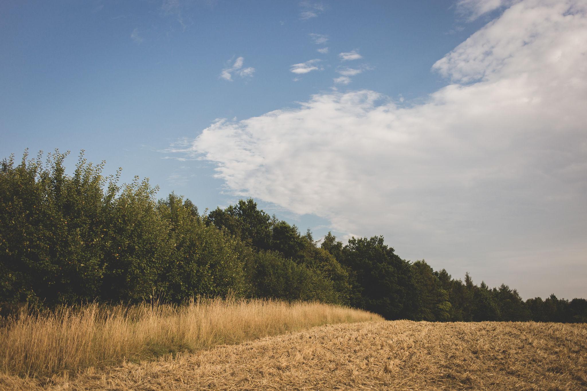 Fields IV